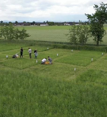 Praxistest auf einer grünen Wiese