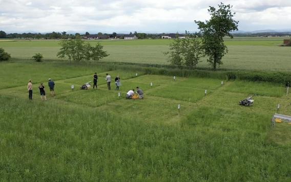 Praxistest der Graslänge auf einer Wiese